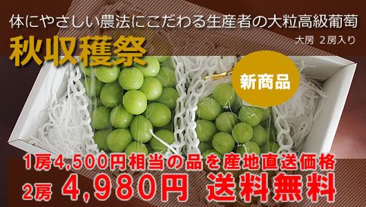 高級葡萄シャインマスカットの産地直送価格