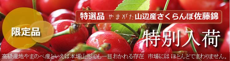 http://mameweb.com/image/sakuranbo/yamanob-all.jpg