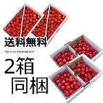 09 【同梱】さくらんぼ佐藤錦 贈答ばら1�s×2箱 (山形産)